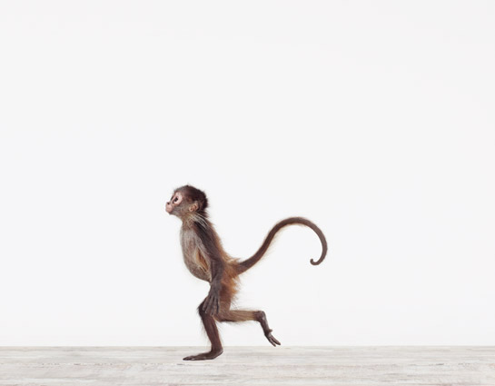 Baby-Monkey02_Baby%20Animal%20Photography%20Prints