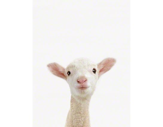 Lamb_Art%20for%20Nursery