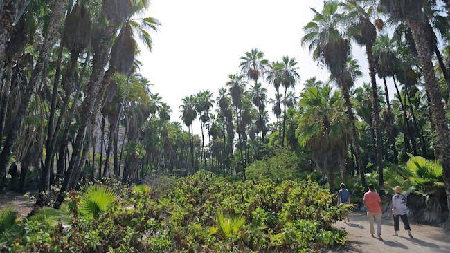 Todos-Santos-garden